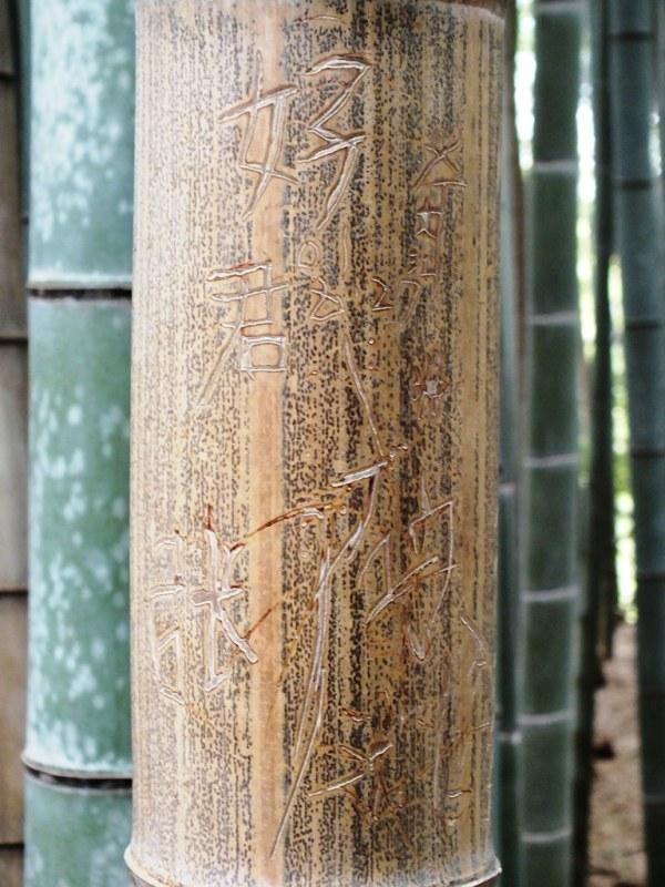 Bambous Arashiyama - 16