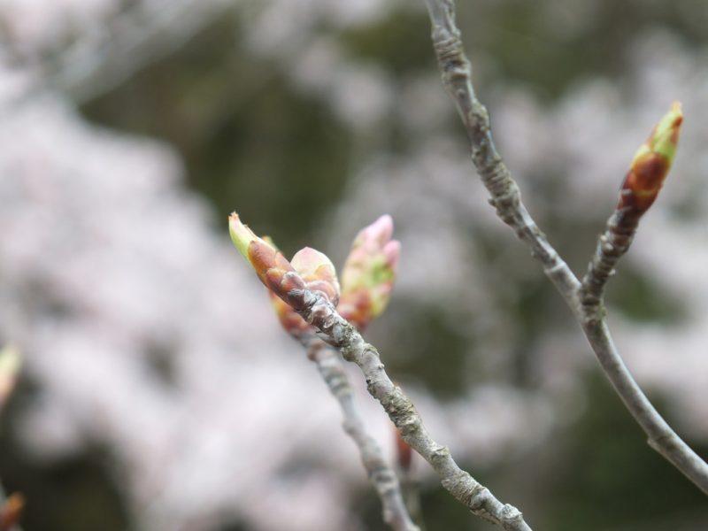 6 - Labyrinth of Cherry Blossoms - Tadao Ando