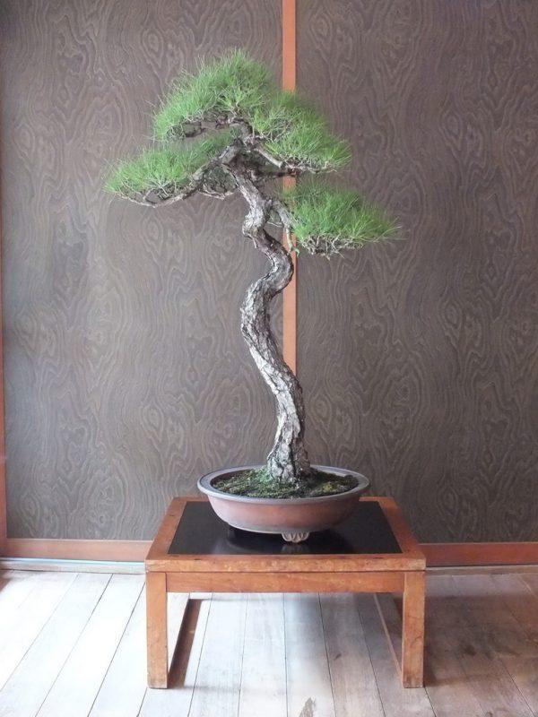 feel-feel-bonsai-en-ete-7