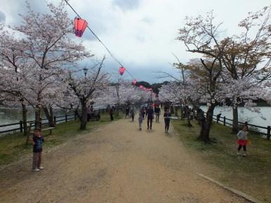 Cerisiers au Parc Kikaku 2017 - 22