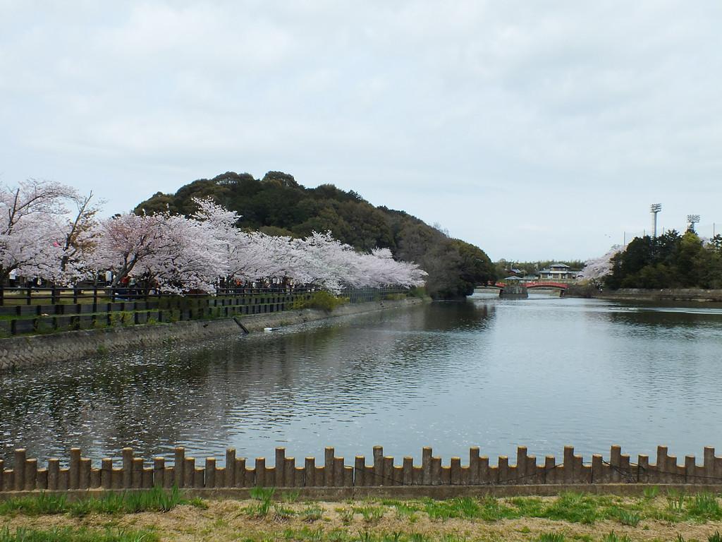 Cerisiers au Parc Kikaku 2017 - 28