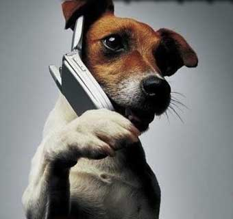 Como seria se o seu cachorro tivesse um celular<dataavatar hidden data-avatar-url=http://1.gravatar.com/avatar/4384f4262bbe1521c2877dcf9b9b7c50?s=96&d=mm&r=g></dataavatar>