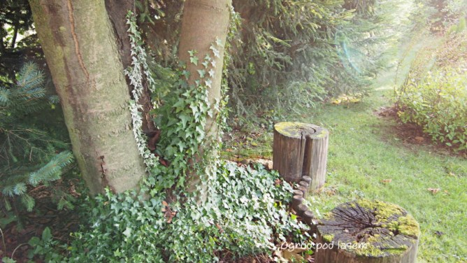 Pień, korzeń w ogrodzie