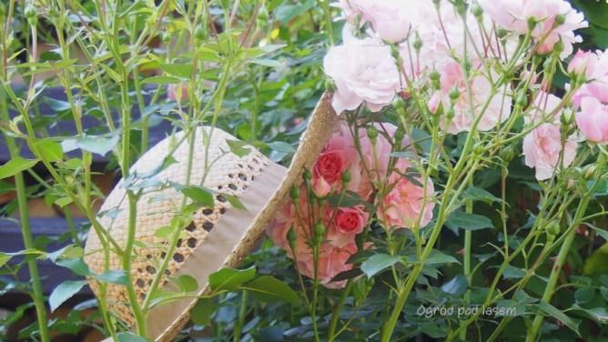 Z różą Westerland, w tle Novalis