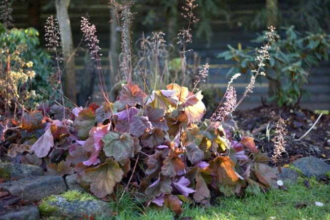 Żurawki jesienią