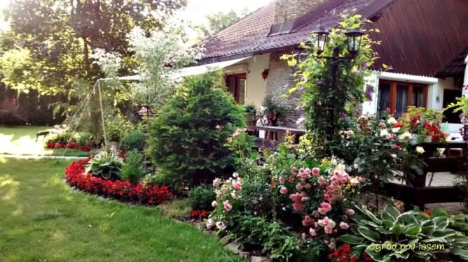 Mój ogród