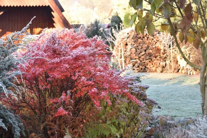 Berberys jesienią