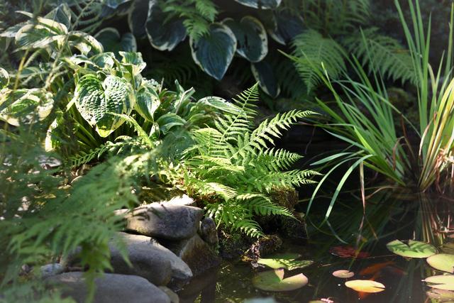Leśne rośliny w ogrodzie