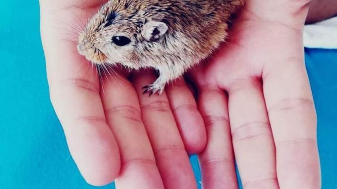 hayvan deneylerine alternatif