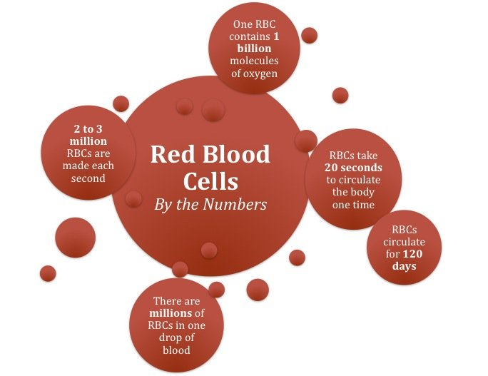How Chemotherapy Treatment Affects Your Blood Cells: OHC