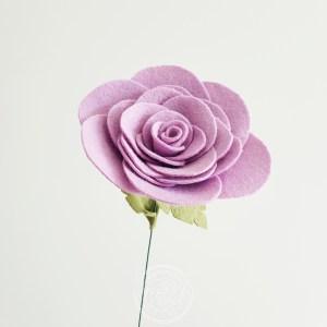 Rose - Wisteria