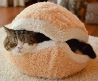 The Best Patty Ever: Cat Burger Pillow | OhGizmo!