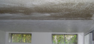 OHHN - Ceiling Mold