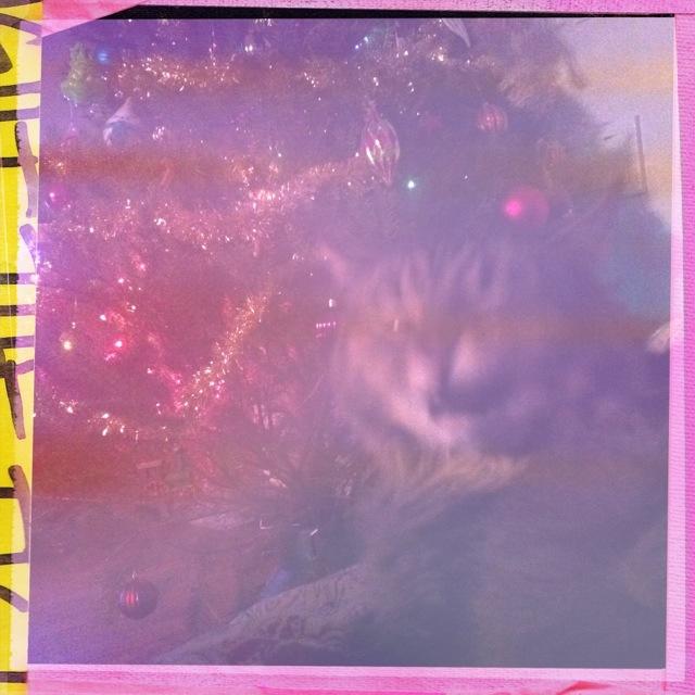 20111219-134540.jpg