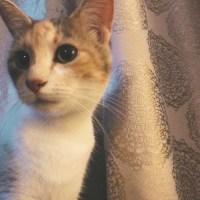 Barf & Cats & Mum & Dud