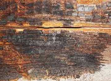 Dry rot damaging wood in a home