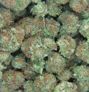 Pile of Marijuana
