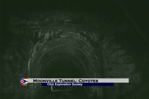 Moonville Tunnel: Coyotes