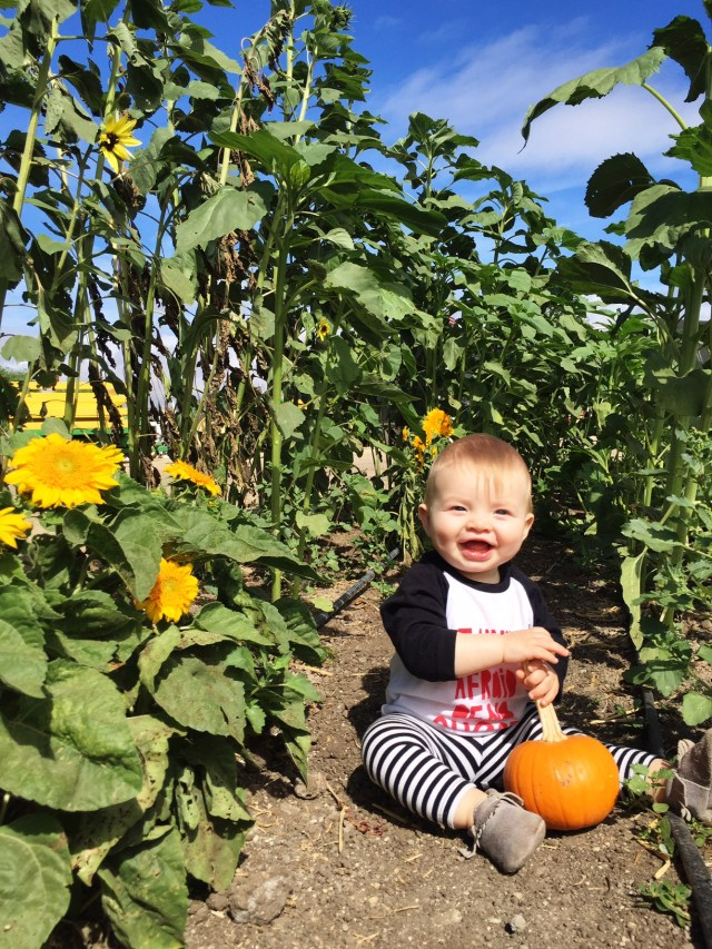 adorable baby in a pumpkin patch fall photo
