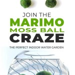 Join The Marimo Moss Ball Craze The Perfect Indoor Water Garden Ohmeohmy Blog