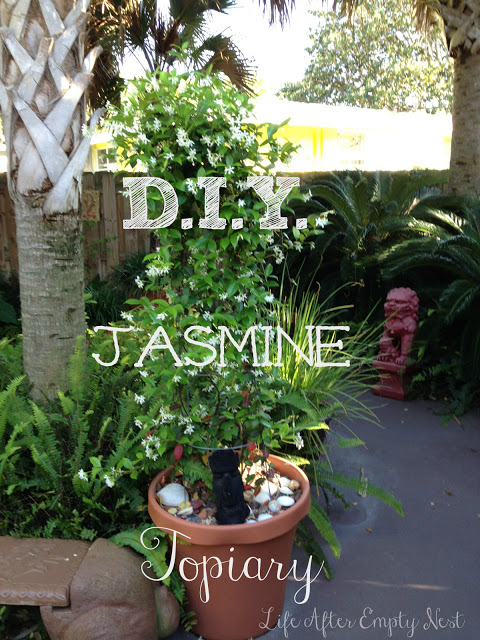 How to Make a Jasmine Topiary
