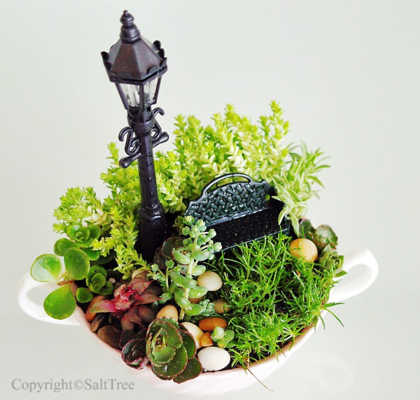Miniature Teacup Garden