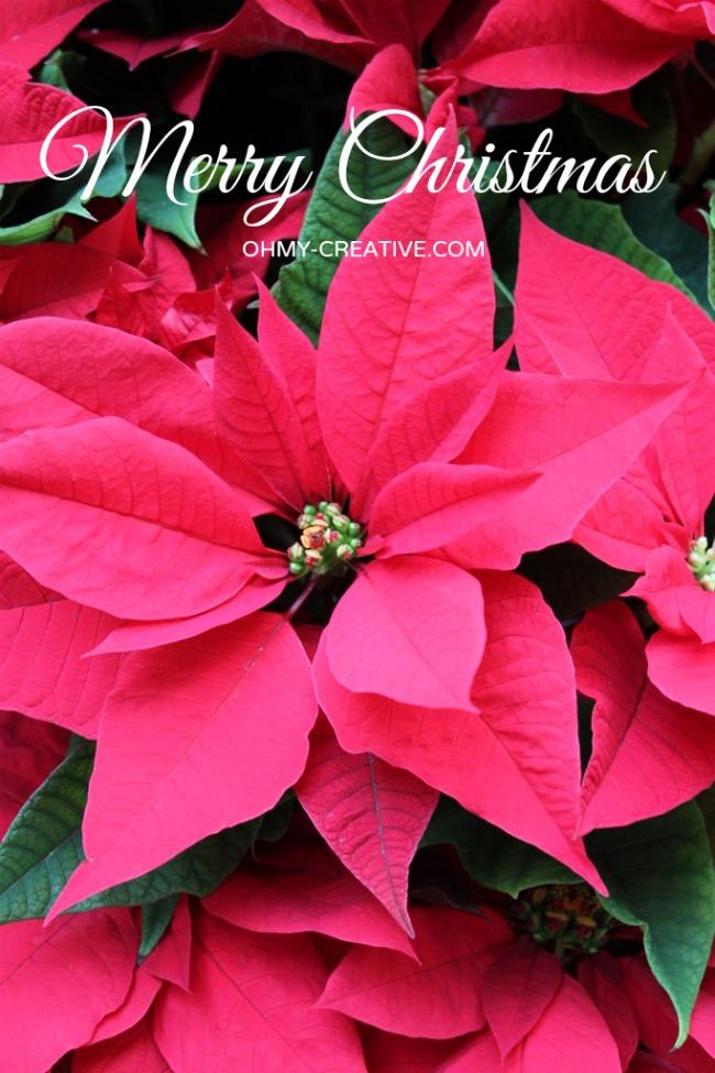 Merry Christmas     OhMy-Creative.com