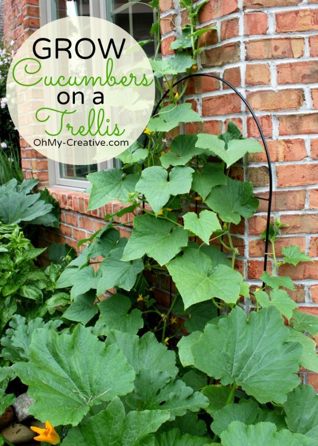 Vertical Cucumber Trellis
