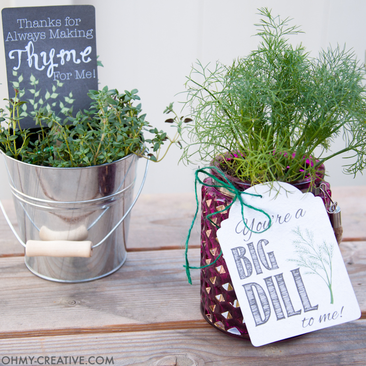 These are the perfect homemade gifts. Make beautiful potted herb DIY gifts with printable tags for Teacher Appreciation gifts or Mother's Day gifts this spring.   OHMY-CREATIVE.COM