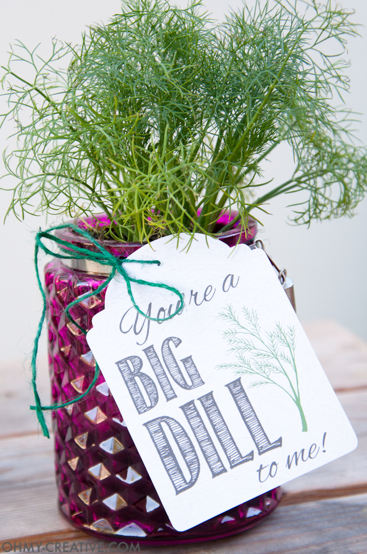 These are the perfect homemade gifts. Make beautiful potted herb DIY gifts with printable tags for Teacher Appreciation gifts or Mother's Day gifts this spring. | OHMY-CREATIVE.COM
