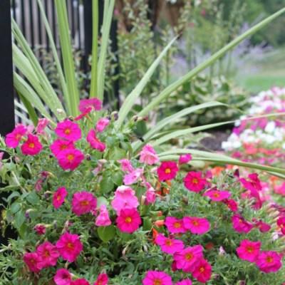How To Grow Beautiful Flowers