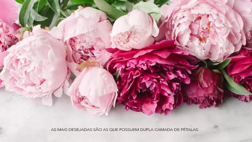 Peonias-Oh-My-Closet-Bouquet-Onde-Encontrar
