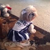 Seahawks Shih Tzu Cheerleader
