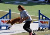 USDAA Cynosport 2014