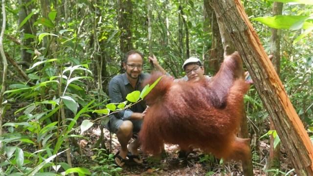 Incontro con la giovane orangotango nel parco nazionale di Tanjung Puting
