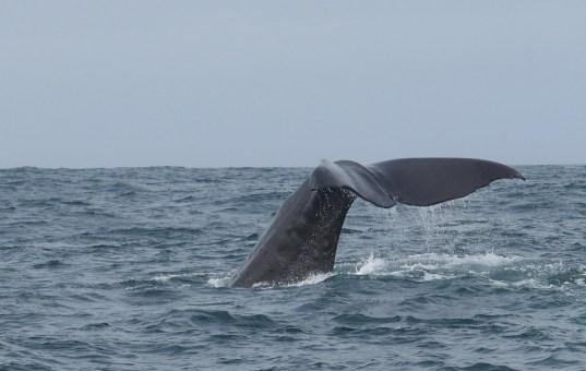 Kaikoura, Wale, Seelöwen und grandiose Landschaft
