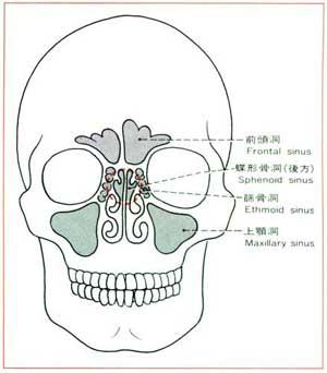 鼻腔の可視化