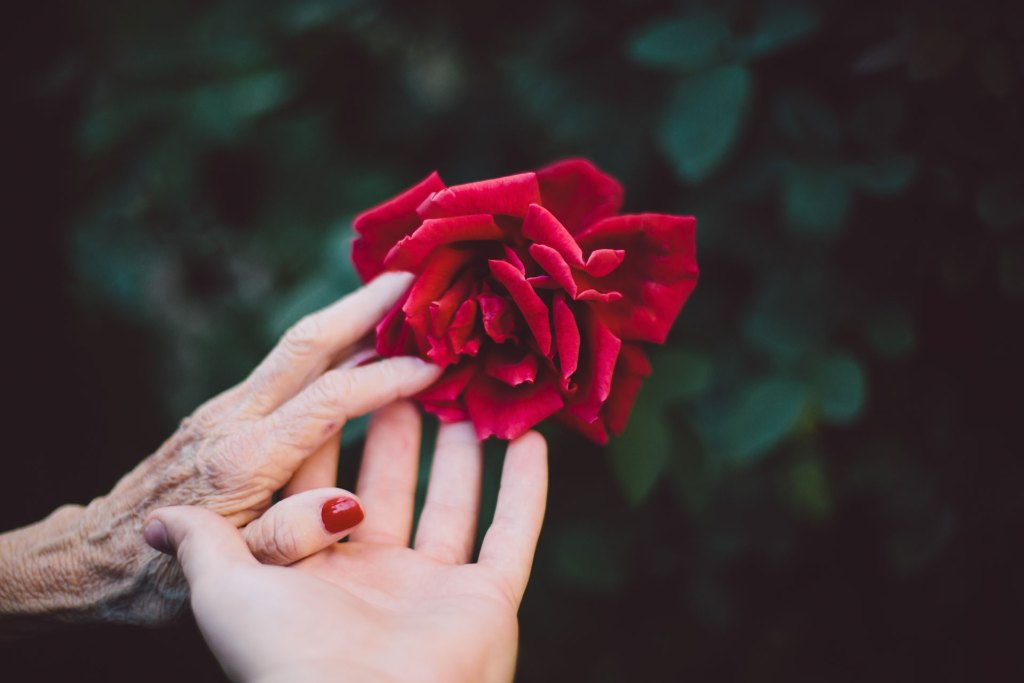 Woman-holding-red-rose