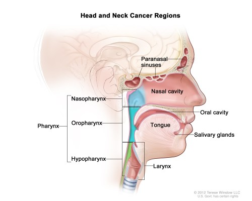 small resolution of illustration of head and neck cancer regions