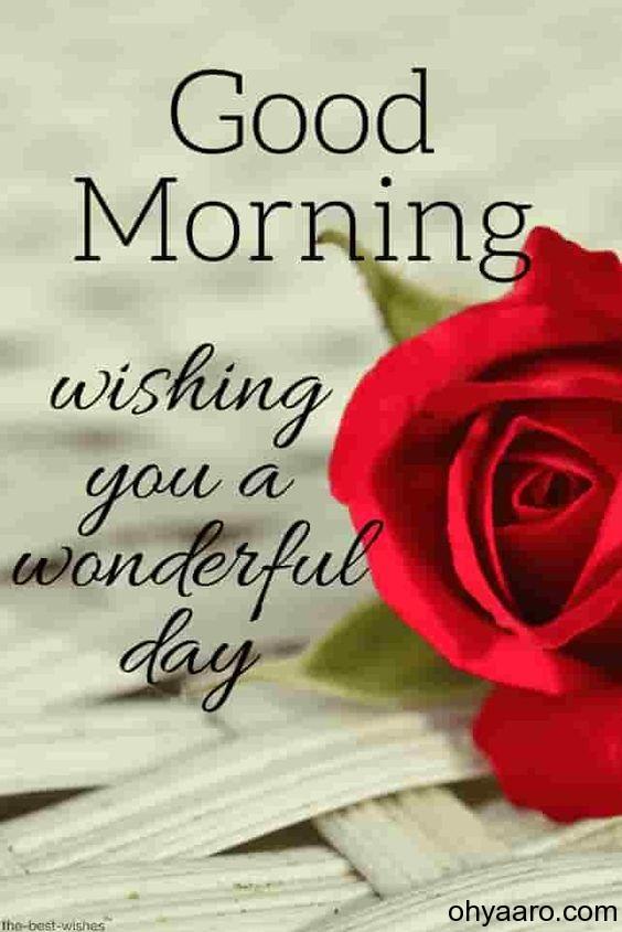 best good morning flowers