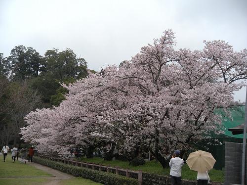 弓道場2014.3.30