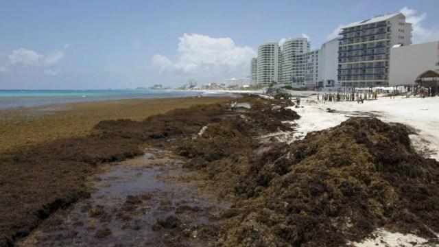 Sargazo hunde las tarifas hoteleras en Quintana Roo