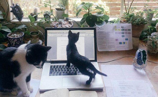 Imagen: Mascotas en un departamento, 4 de noviembre, (Imagen: Especial)