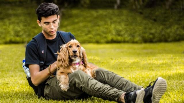 Actividades de ocio, Persona, Mascotas, Perro