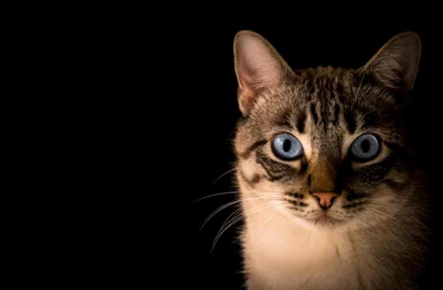 23 de febrero 2020, Mascotas, Gato, Animal