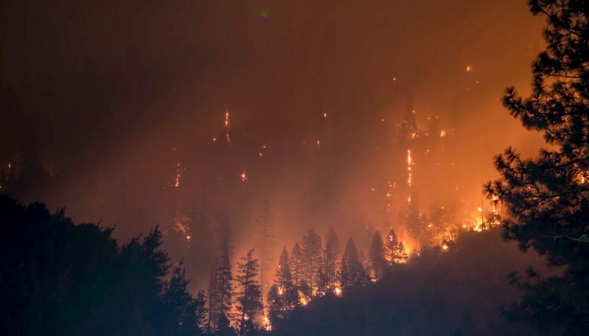 10 de febrero de 2020, un incendio forestal (Imagen: Unsplash)
