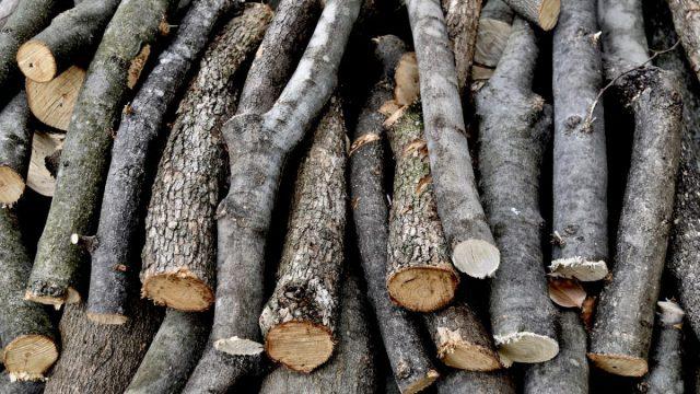 Sembrando Vida, ¿responsable de la nueva ola de deforestación?