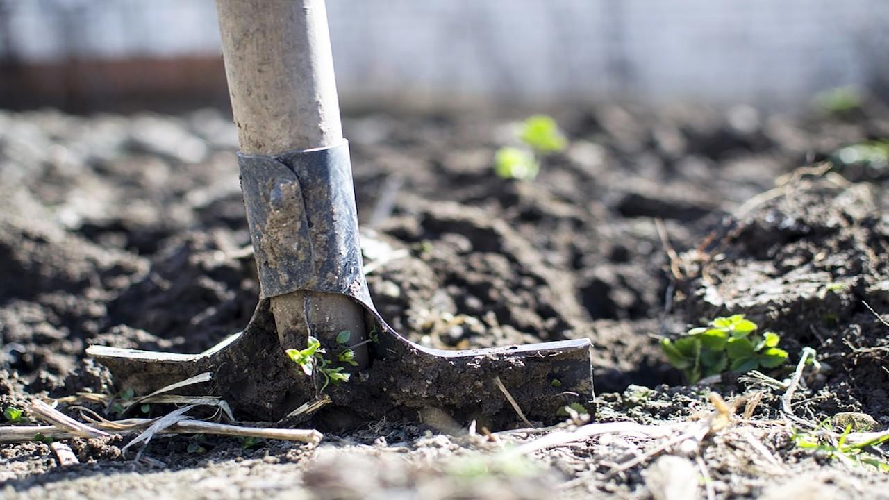 Trabajadores agricolas (Imagen: pixabay)
