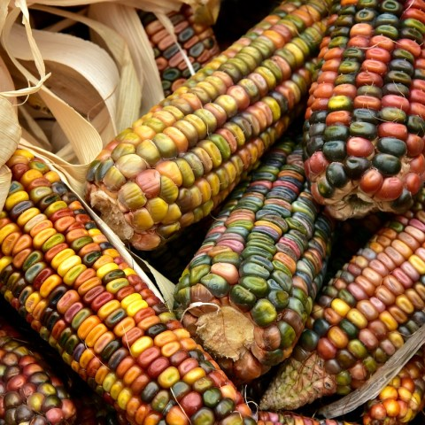AMLO pide no aumentar precios a productores de harina de maíz