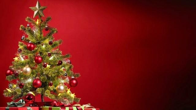 Esto debes considerar al comprar un árbol de Navidad (Imagen: pixabay)